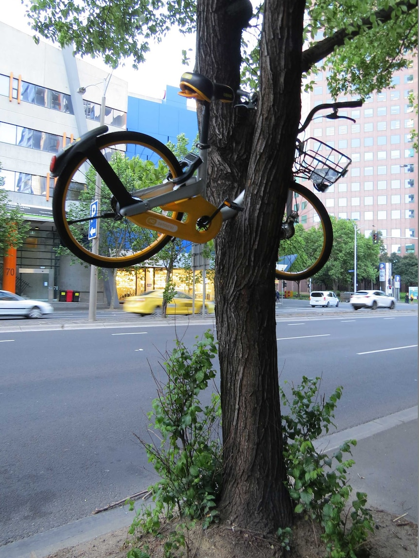 A yellow oBike stuck between to branches of a tree in Melbourne's CBD.