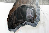 A piece of street art shows a wombat emerging from cave drawn on the side of a railway bridge.