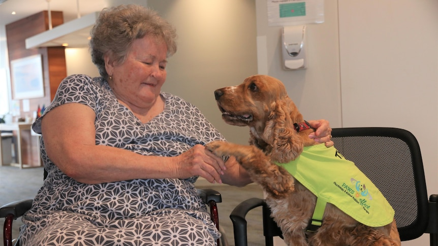 An elderly woman pats a dog.