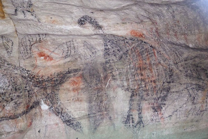 Charcoal art inside in a cave showing drawings of the whale tail and emus on sandstone wall.