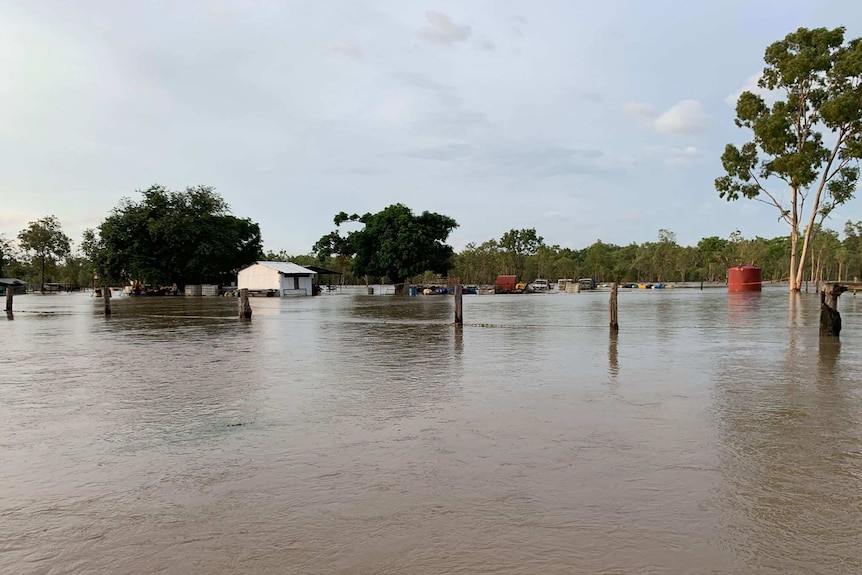 Fencing can be seen sticking out of floodwaters on Strathmay Station in Cape York.