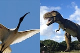 Side-by-side image of an ibis in flight and a model of a Tyrannosaurus rex
