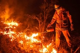 A firefighter carries out back-burning operations in the Blue Mountains