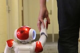 A robot walking through an office holding a man's hand.