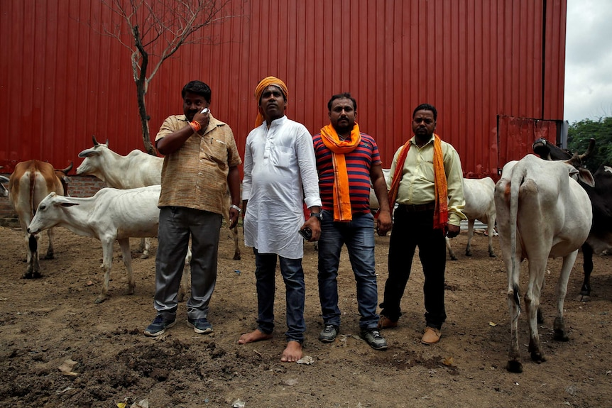 Four members of a Hindu nationalist vigilante group pose surrounded by cows.