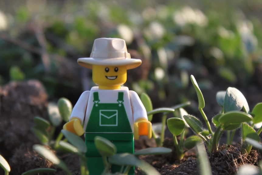 Lego minifig farmer among sprouting clover