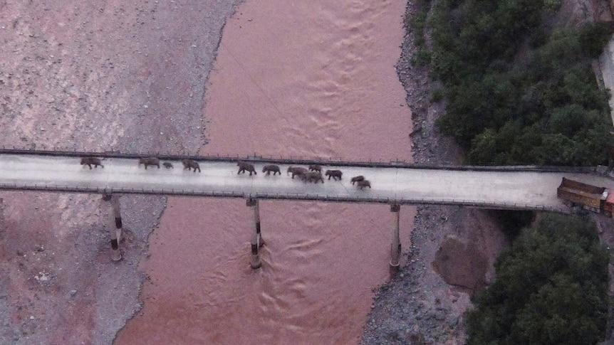 An aerial shot of a herd of elephants crossing a bridge.