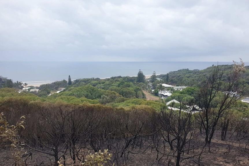 Burnt bushland above Happy Valley on Fraser Island.