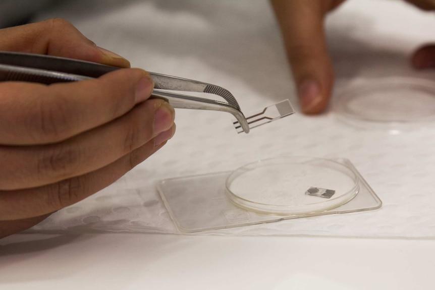 Noushin Nasiri uses tweezers to hold the breathalyser disk