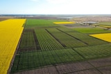 An aerial shot of wheat trial plots in Narrabri, NSW.