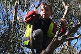 a boy sits on the branch of a tree