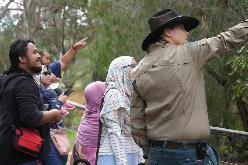 Visitors look at a koala on the boardwalk at Yanchep.