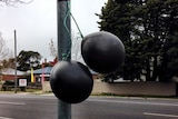 Black balloons hanging in the streets of Bendigo to oppose plans to build a mosque