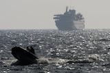 An Israeli speed boat escorts Turkish ship Mavi Marmara into port following fatal raid.