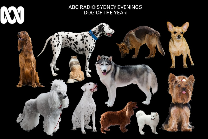 A poster showing many different dog breeds