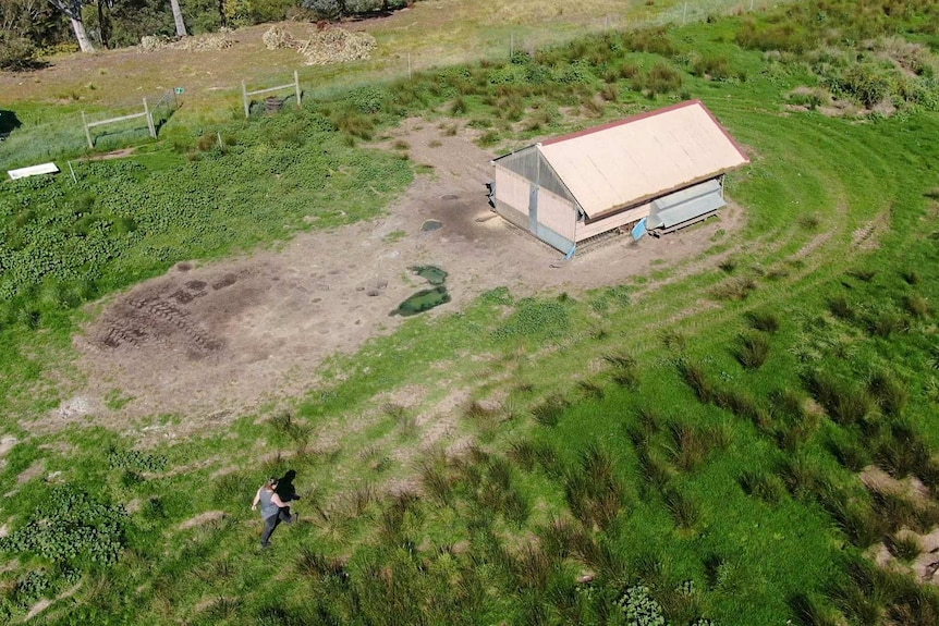 A birds eye view of a chicken shed in a green paddock with a woman in grey walking towards it.