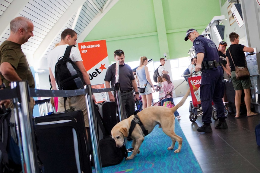 An AFP handler with his sniffer dog check the luggage of passengers waiting to check in to a Jetstar flight