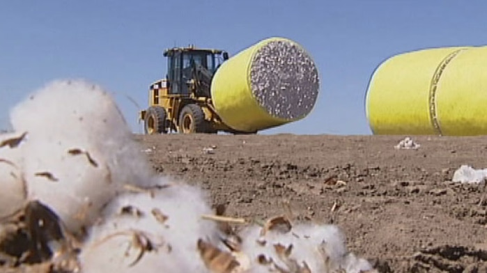 Cotton and tractor in field at Cubbie Station in far south-west Queensland