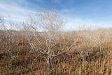 A sea of dead mangroves