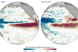 Pacific Ocean temperature maps comparing the 1997 and 2015 El Nino events showing similar temperature increases.