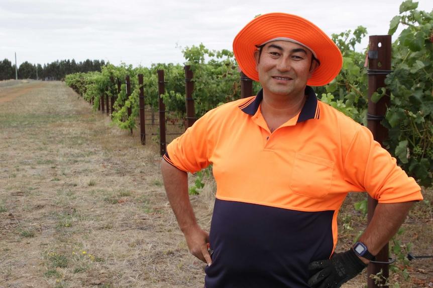 Faraz Ali working on a vineyard