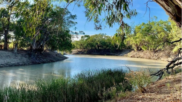 A wide river bend with a large green gum tree in the foreground