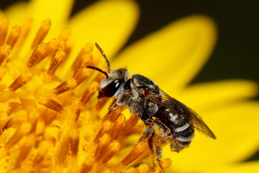 Close up on a bee on a yellow plant
