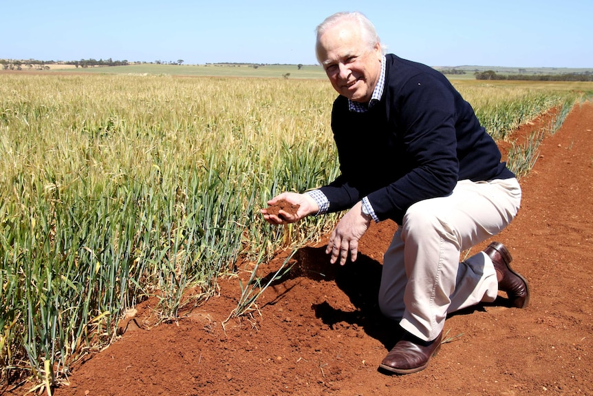 John Lawton kneels in the red dirt next to barley crops in Narembeen
