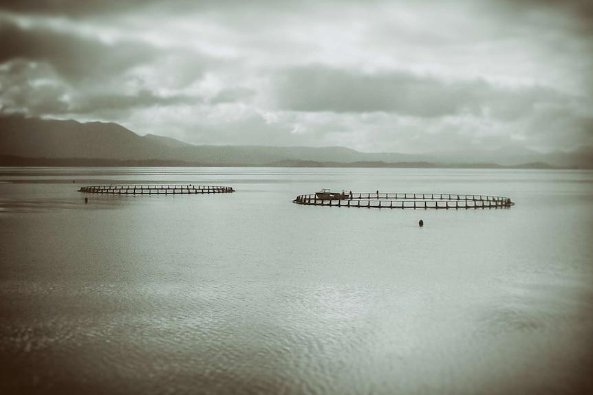 Macquarie Harbour salmon pens in 2006