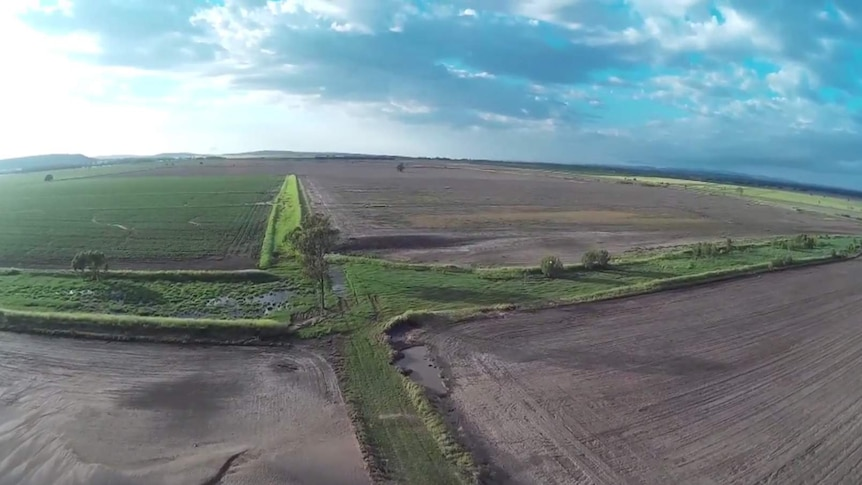 A drone's eye view of flood damage to Paul Heit's mung bean crops.