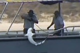 WA fisheries officers catch a second shark off a Perth beach