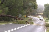 A car travels along a road as a tree blocks one of the lanes