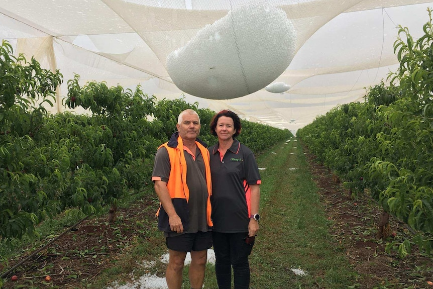 Teresa and Lindsay Francis standing in front of hail-logged netting.