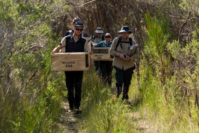 A team of people holding crates walk through shrubbery.