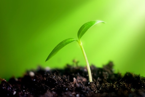 Close-up of a young sprout emerging from the soil. (Thinkstock: iStockphoto)