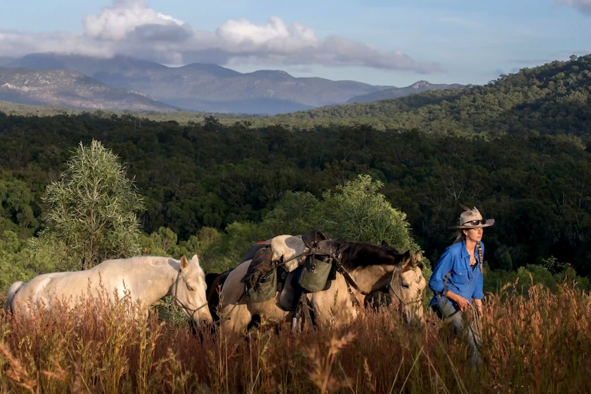 A woman leads three horses through hilly Australian landscape.
