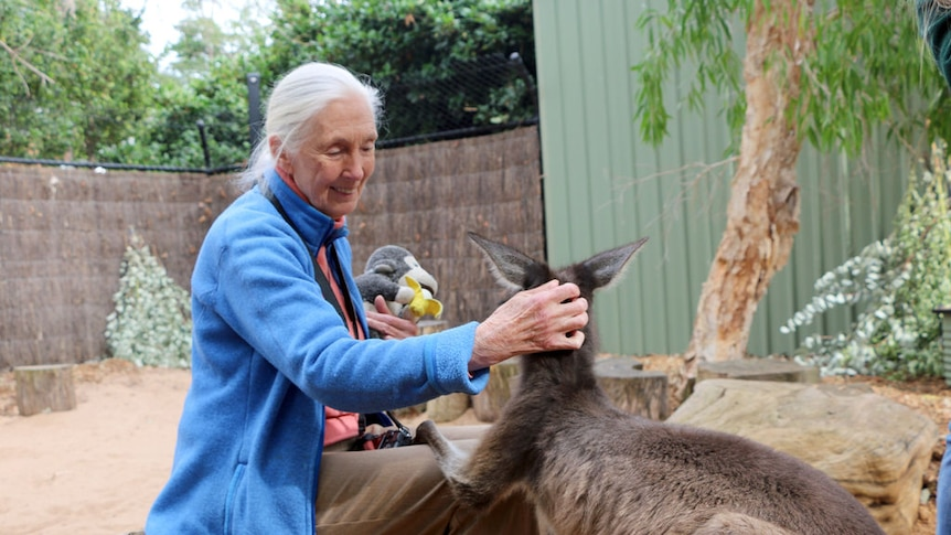 Primatologist Jane Goodall met Australian animals and students on her visit to Perth Zoo.