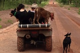 Working dogs on the back of a quad bike on a dirt road.