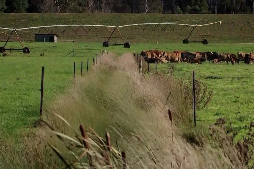 native grasses regrow in a fenced off area