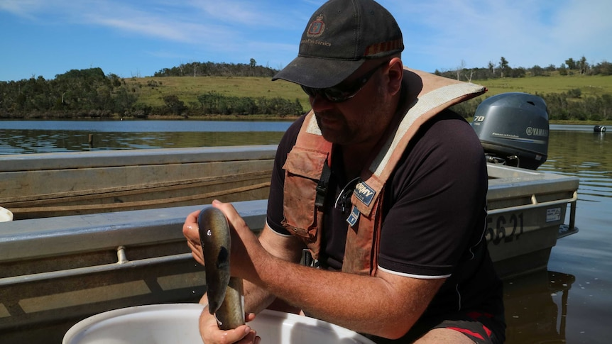 A fisherman holds a slippery freshwater eel