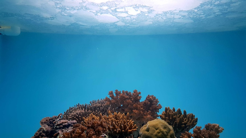 underwater photo of coral with film showing on surface of water