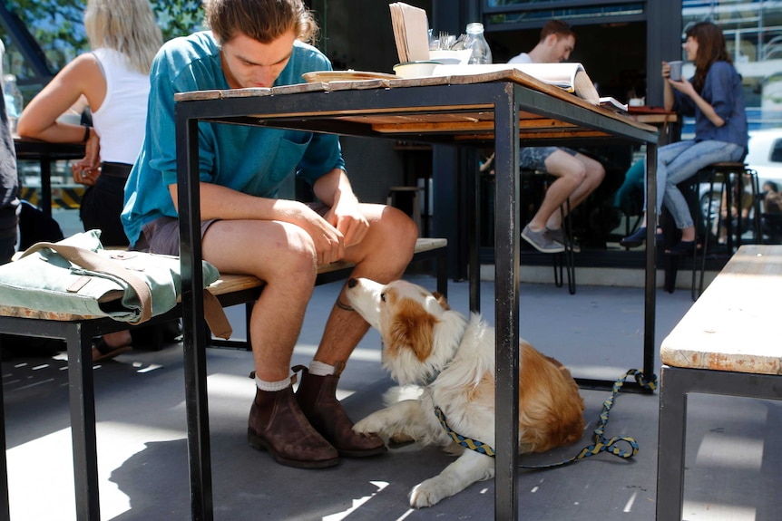 A man at a cafe with a dog under the table.