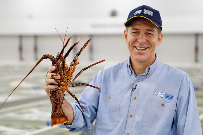 A man holding a rock lobster in Western Australia.