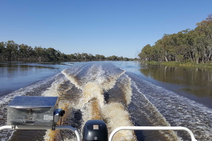 A boat travels down the River Murray near Renmark.