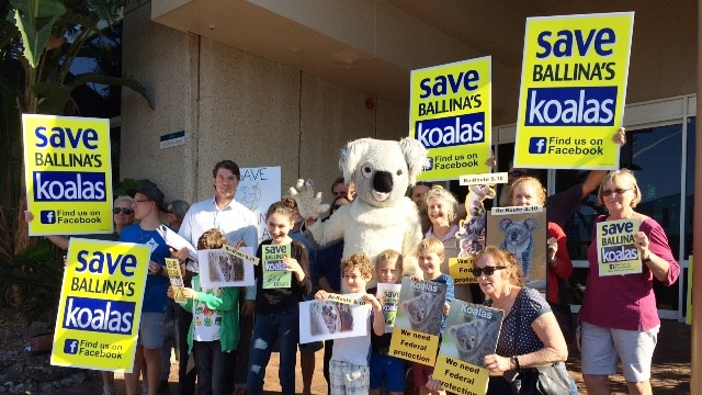 Koala campaigners at Ballina Council