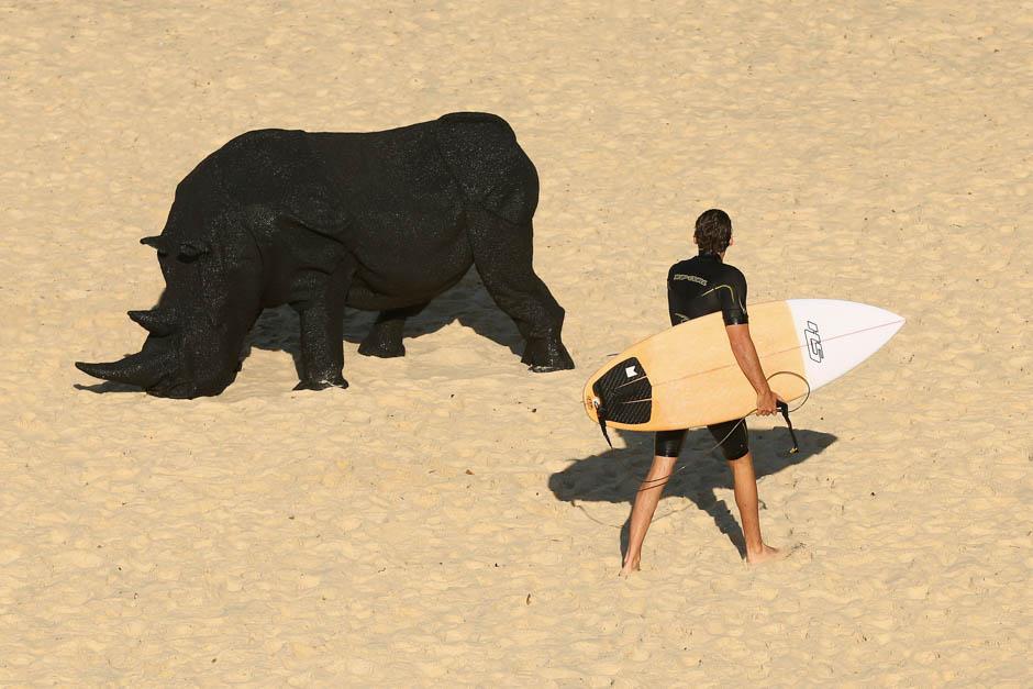 'Gift of the Rhinoceros' by Mikaela Castledine