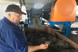 Cane farmer watching tyres crush into a machine.