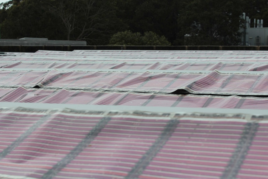 Printed solar panels on the roof of a building at the University of Newcastle.