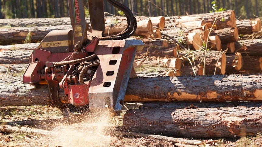 Wood being cut at a regional forest