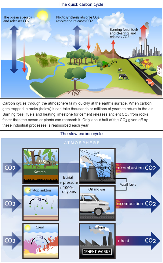 The quick and slow carbon cycles